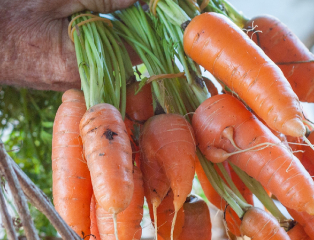 EAT LOCAL – Here's why